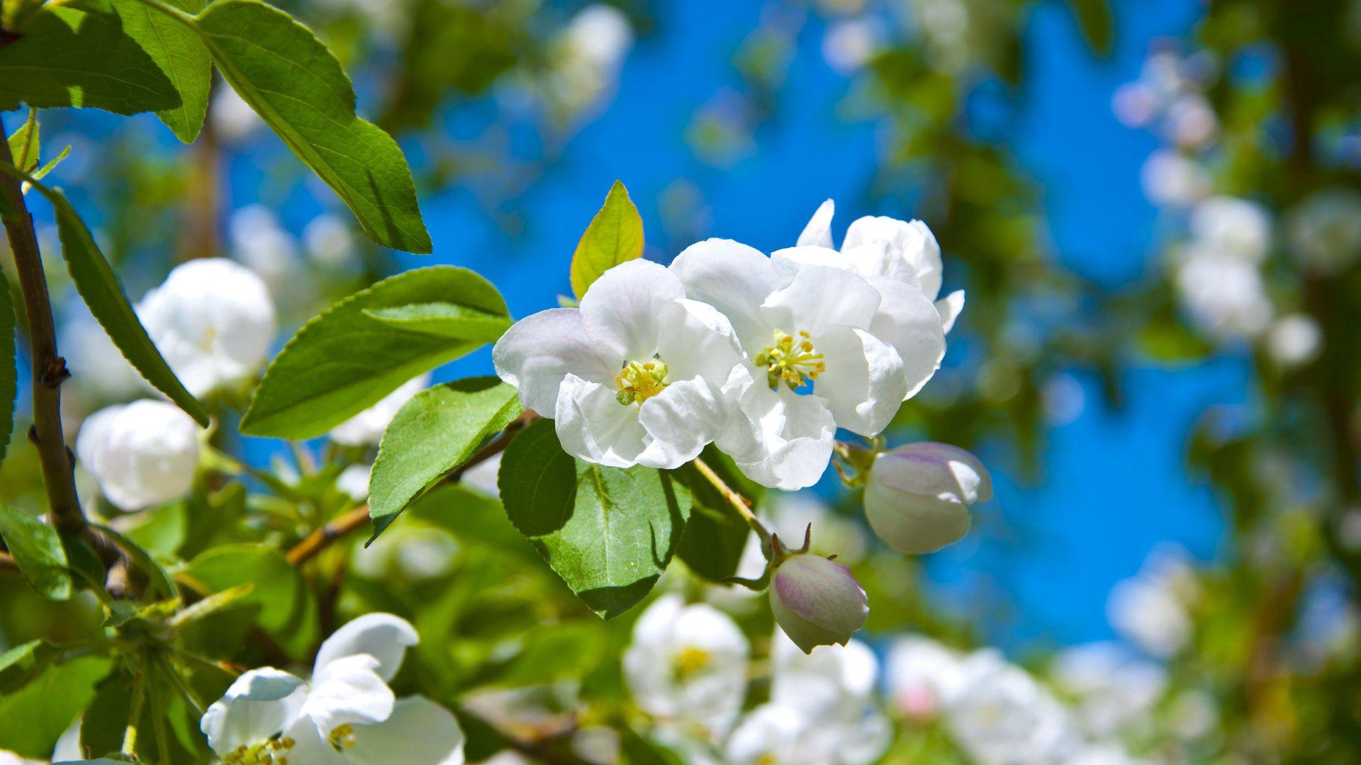 72885 Salvapantallas y fondos de pantalla Flores en tu teléfono. Descarga imágenes de Flores, Florecer, Floración, Primavera, Soleado, Estado Animico, Humor, Verduras gratis