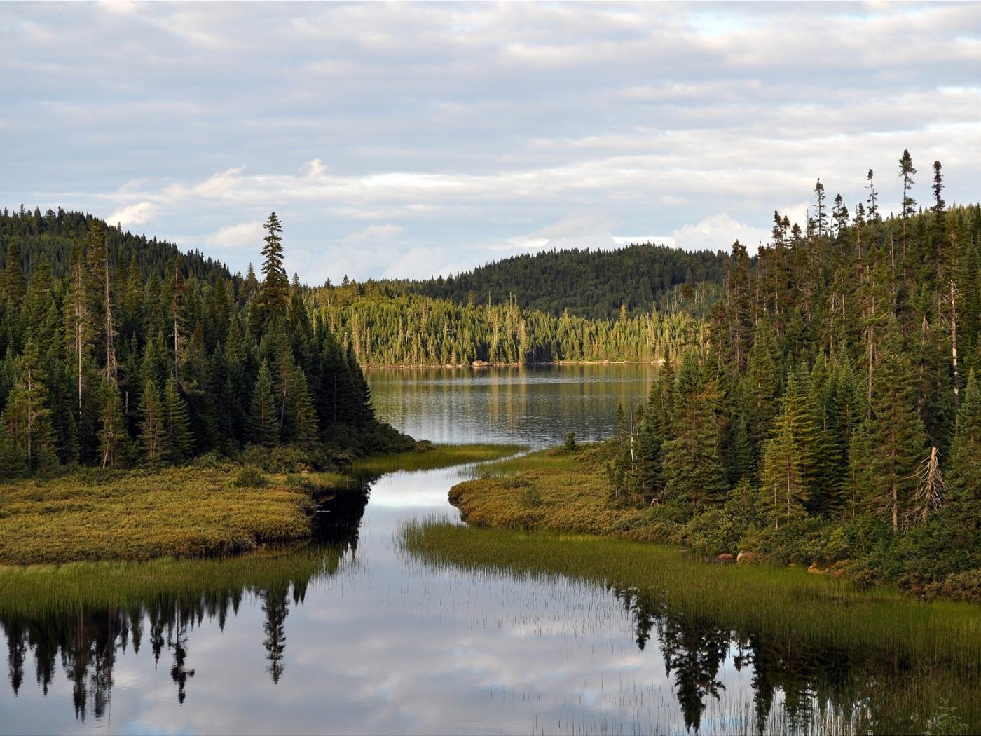 25604 скачать обои Пейзаж, Река, Деревья - заставки и картинки бесплатно