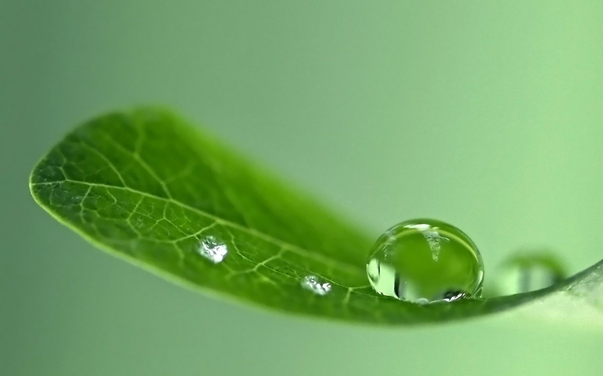 63367 download wallpaper Macro, Sheet, Leaf, Drops, Surface, Shine, Light screensavers and pictures for free