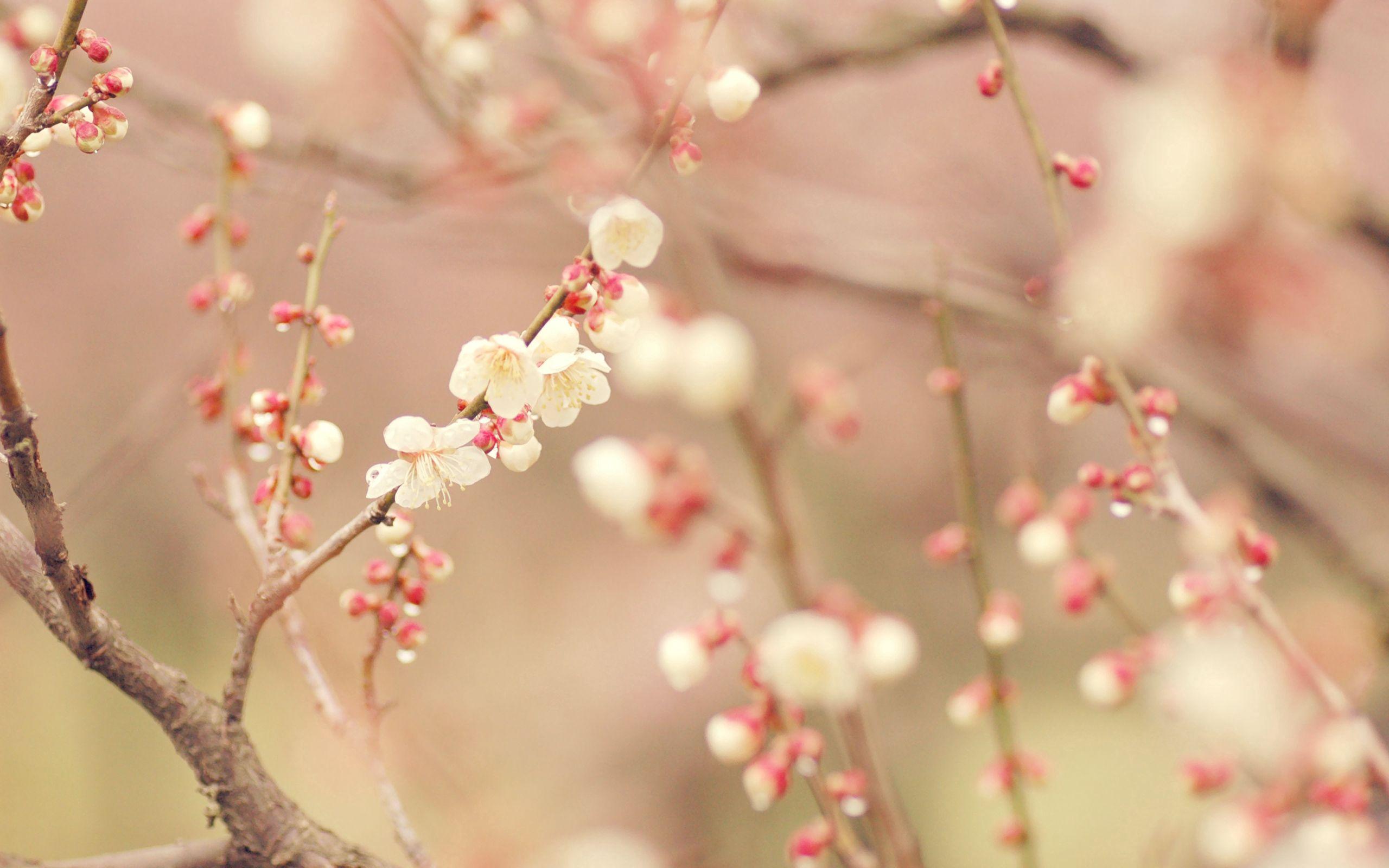 76003 скачать обои Цветы, Цветение, Макро, Дерево, Весна - заставки и картинки бесплатно