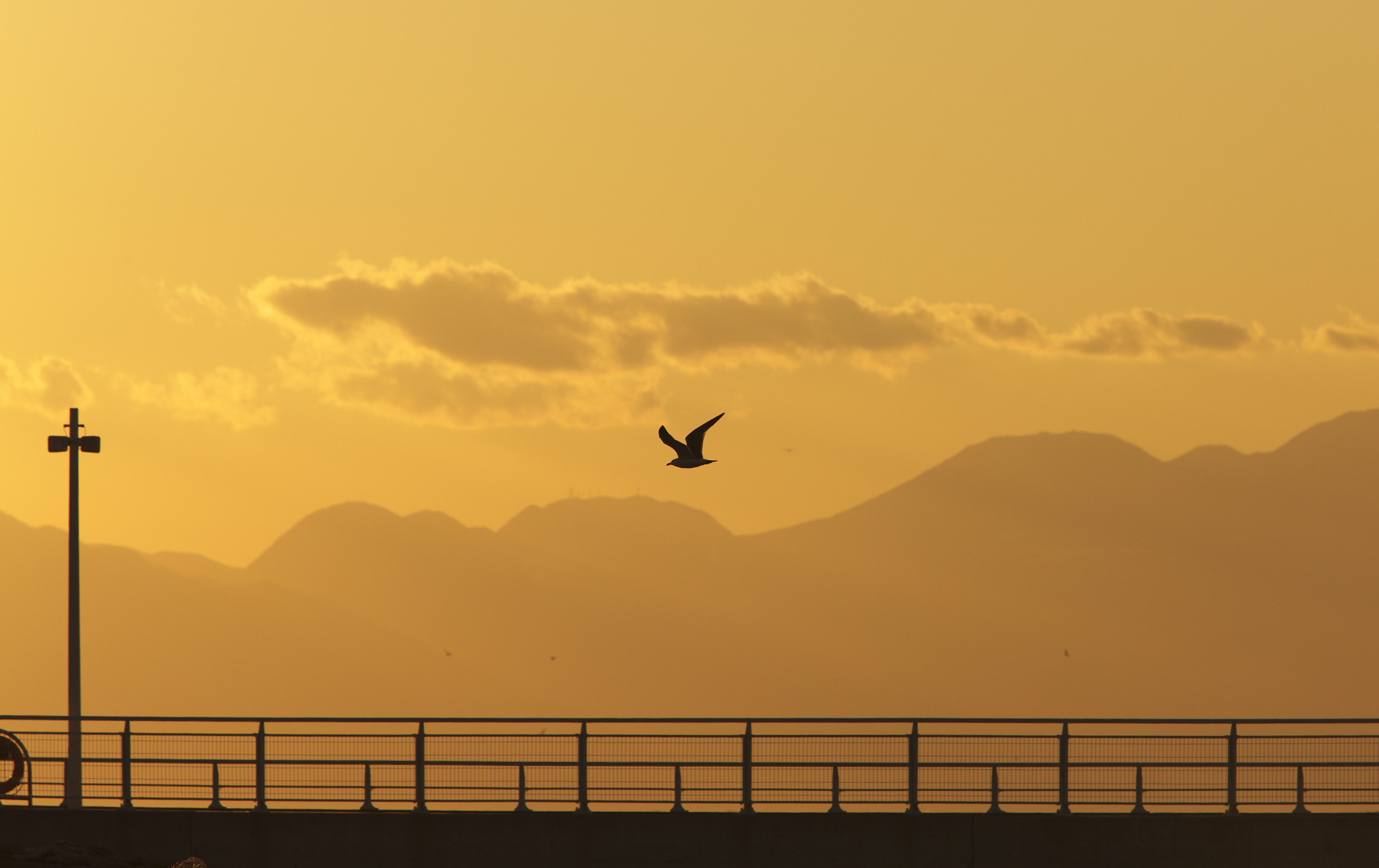 123043 download wallpaper Nature, Gull, Seagull, Bird, Silhouette, Flight, Sunset screensavers and pictures for free