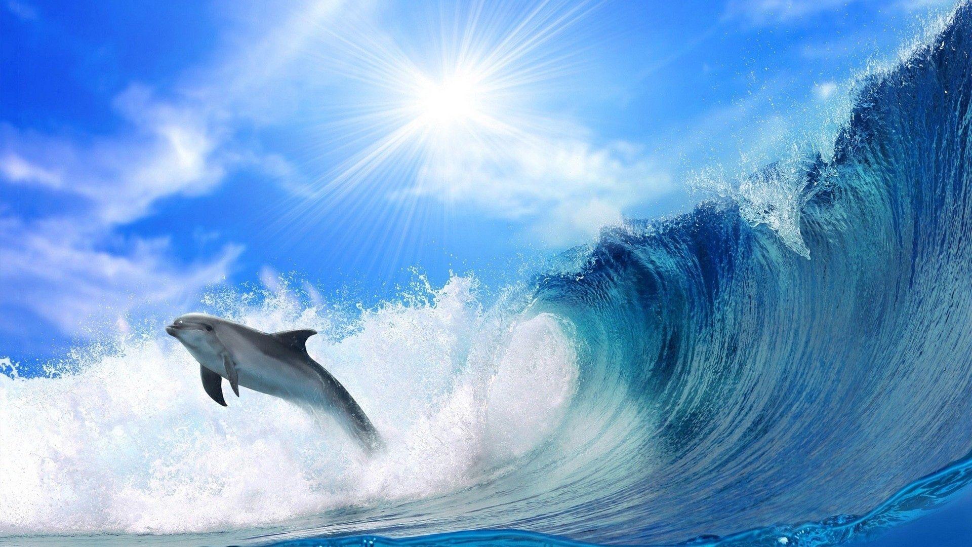 55740 скачать обои Волны, Животные, Море, Блеск, Прыжок, Солнечный Свет, Дельфин - заставки и картинки бесплатно