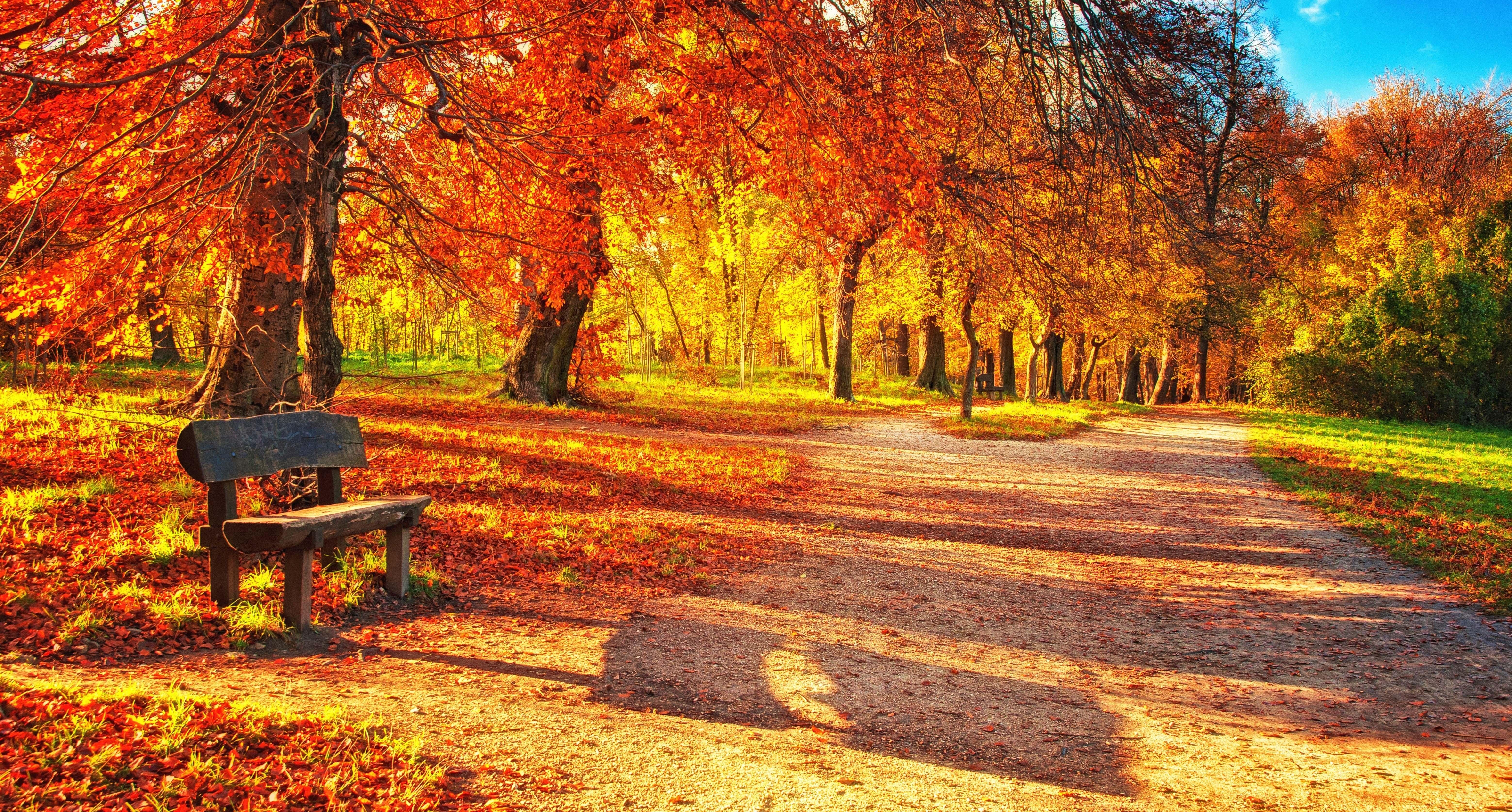 69553 завантажити шпалери Листя, Осінь, Природа, Парк, Лавка, Лавці - заставки і картинки безкоштовно