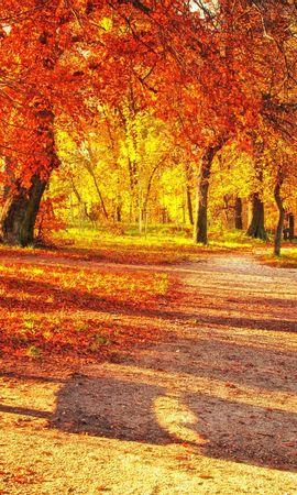 69553 скачать обои Природа, Скамейка, Осень, Парк, Листва - заставки и картинки бесплатно