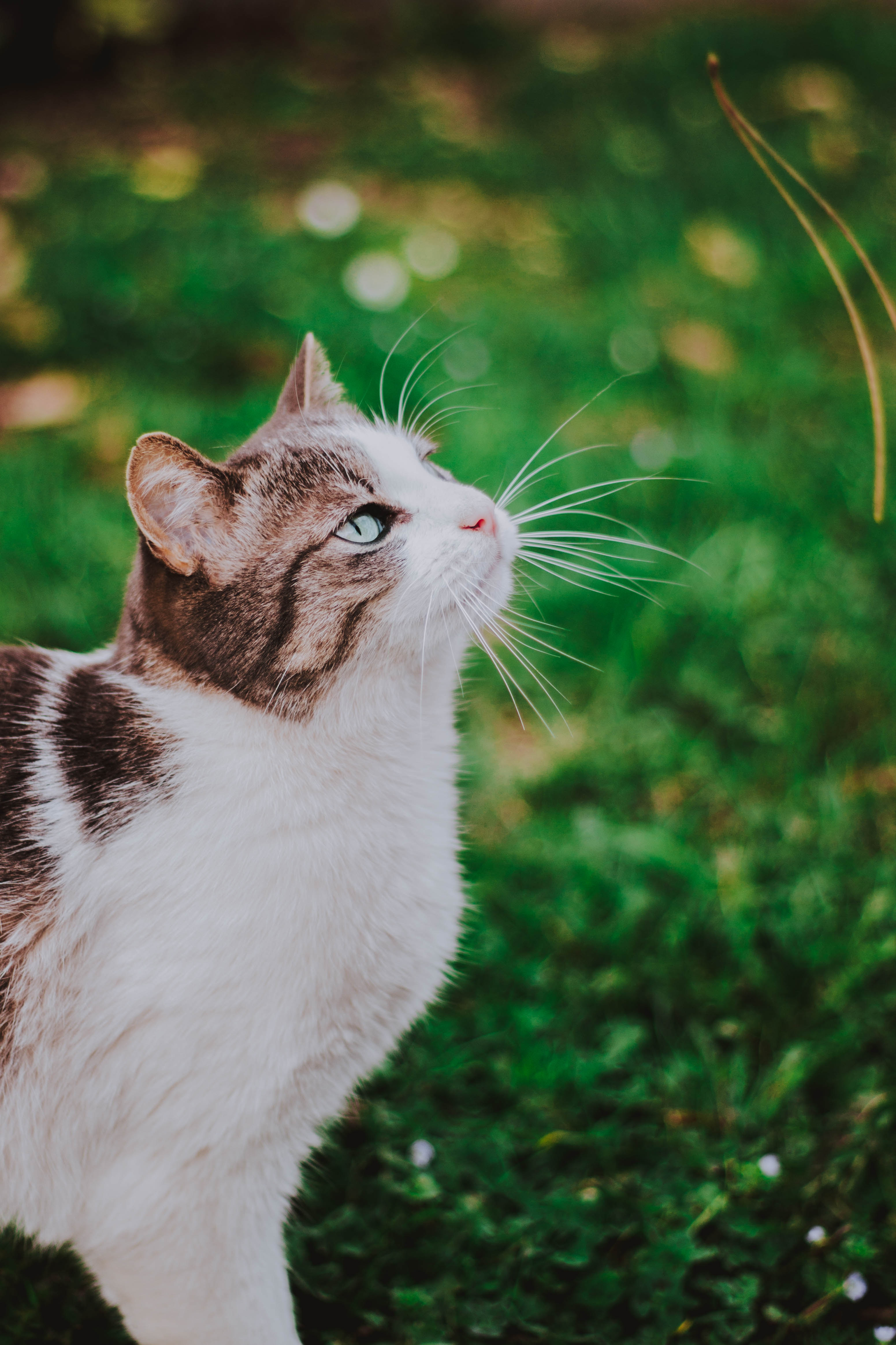 150847 Screensavers and Wallpapers Stroll for phone. Download Animals, Grass, Cat, Muzzle, Blur, Smooth, Stroll pictures for free