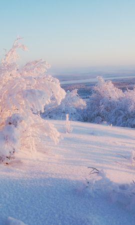 20749 скачать обои Пейзаж, Зима, Снег, Кусты - заставки и картинки бесплатно