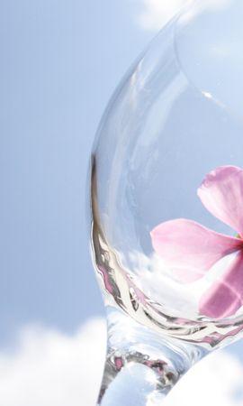 20999 скачать обои Цветы, Фон, Небо, Посуда - заставки и картинки бесплатно