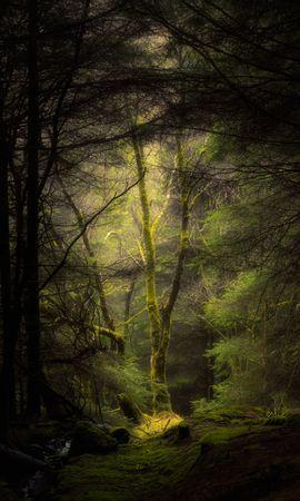 Téléchargez le fond d'écran gratuit 133928: Nature, Forêt, Brouillard, Arbres, Branches, Mousse fond d'écran pour téléphone mobile