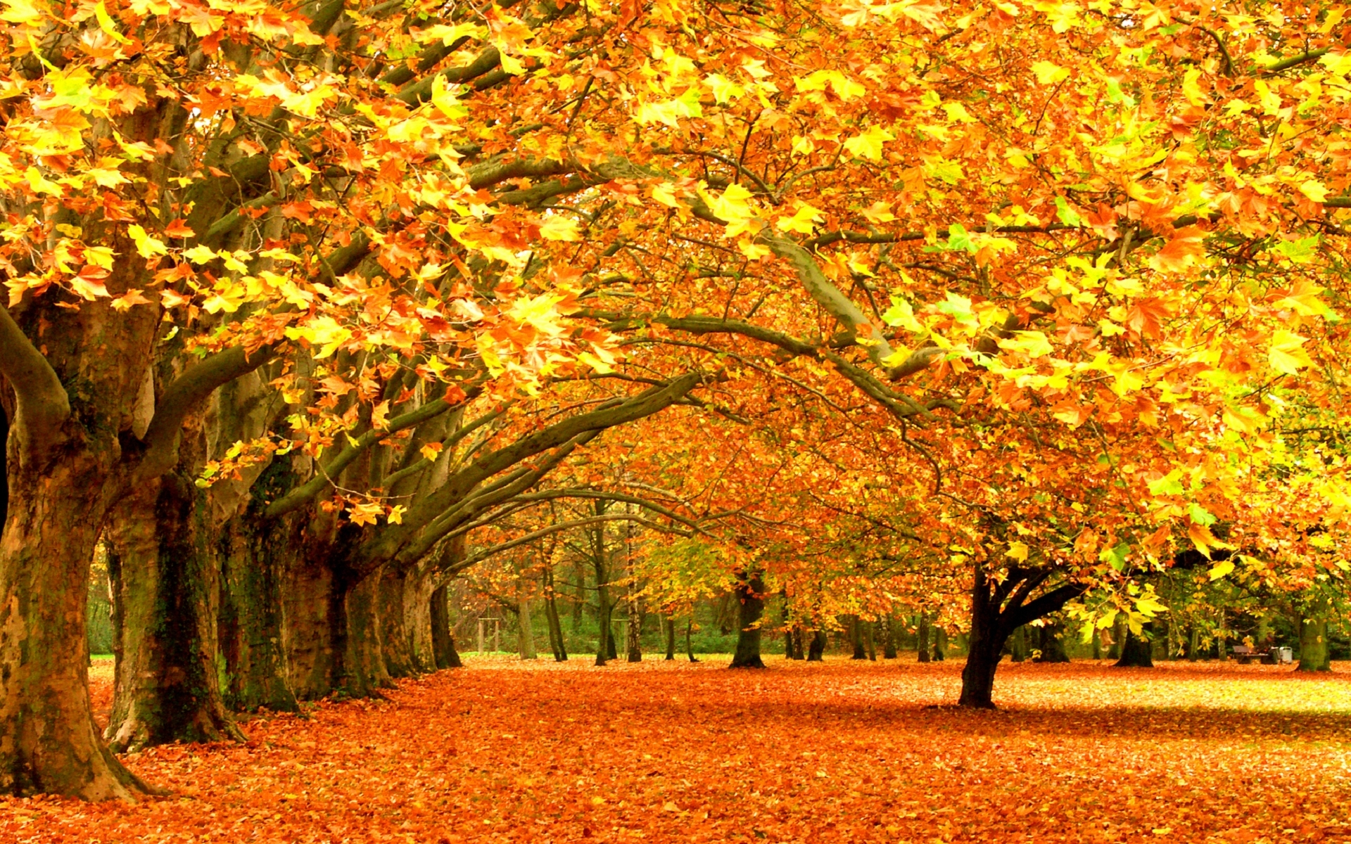 29854 download wallpaper Landscape, Trees, Autumn, Leaves screensavers and pictures for free