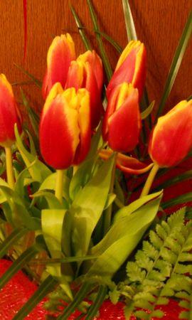 43371 télécharger le fond d'écran Plantes, Fleurs, Tulipes - économiseurs d'écran et images gratuitement