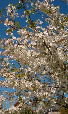 3957 скачать обои Растения, Цветы, Деревья - заставки и картинки бесплатно