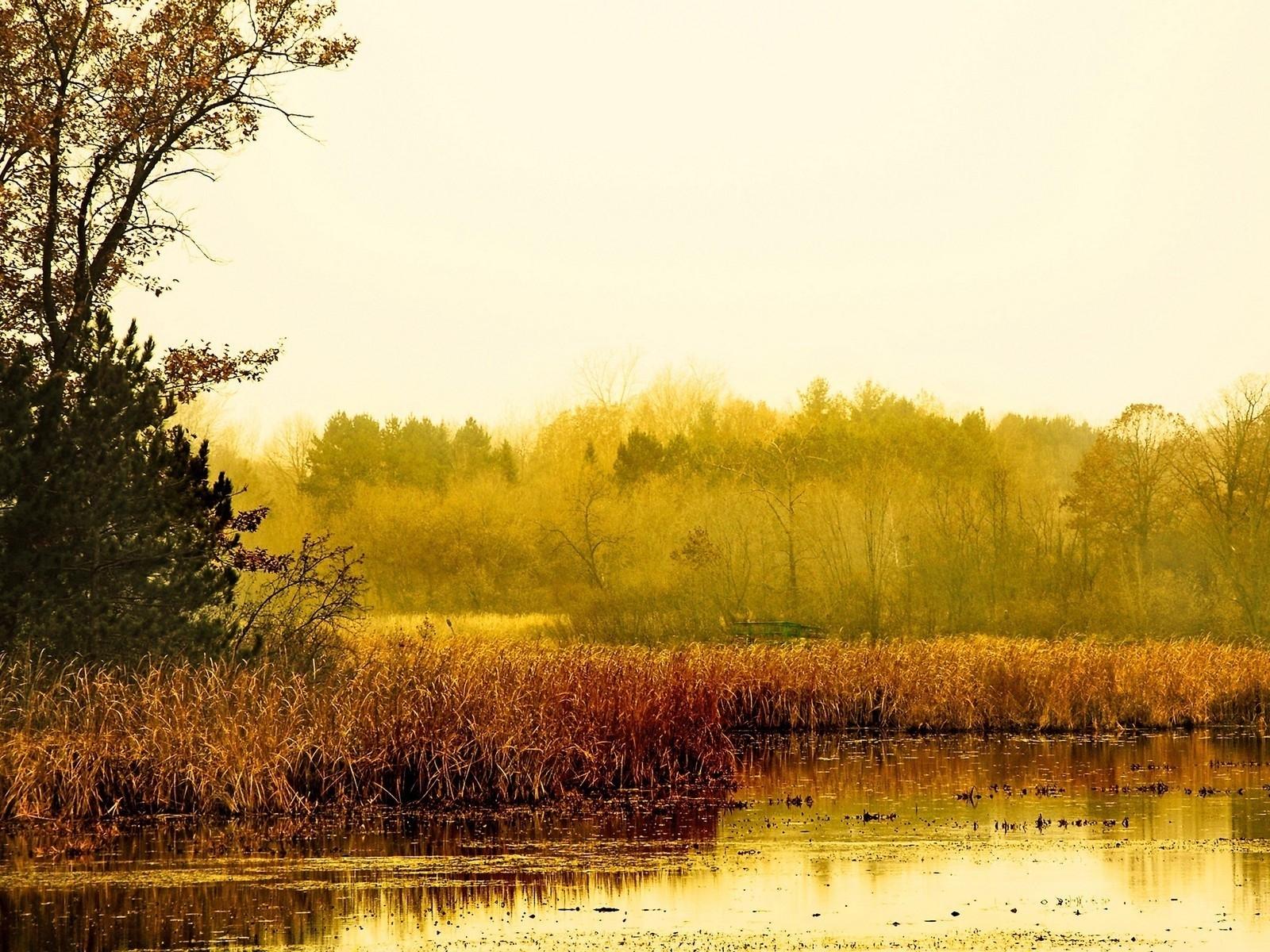 1902 скачать обои Пейзаж, Вода, Деревья, Трава - заставки и картинки бесплатно