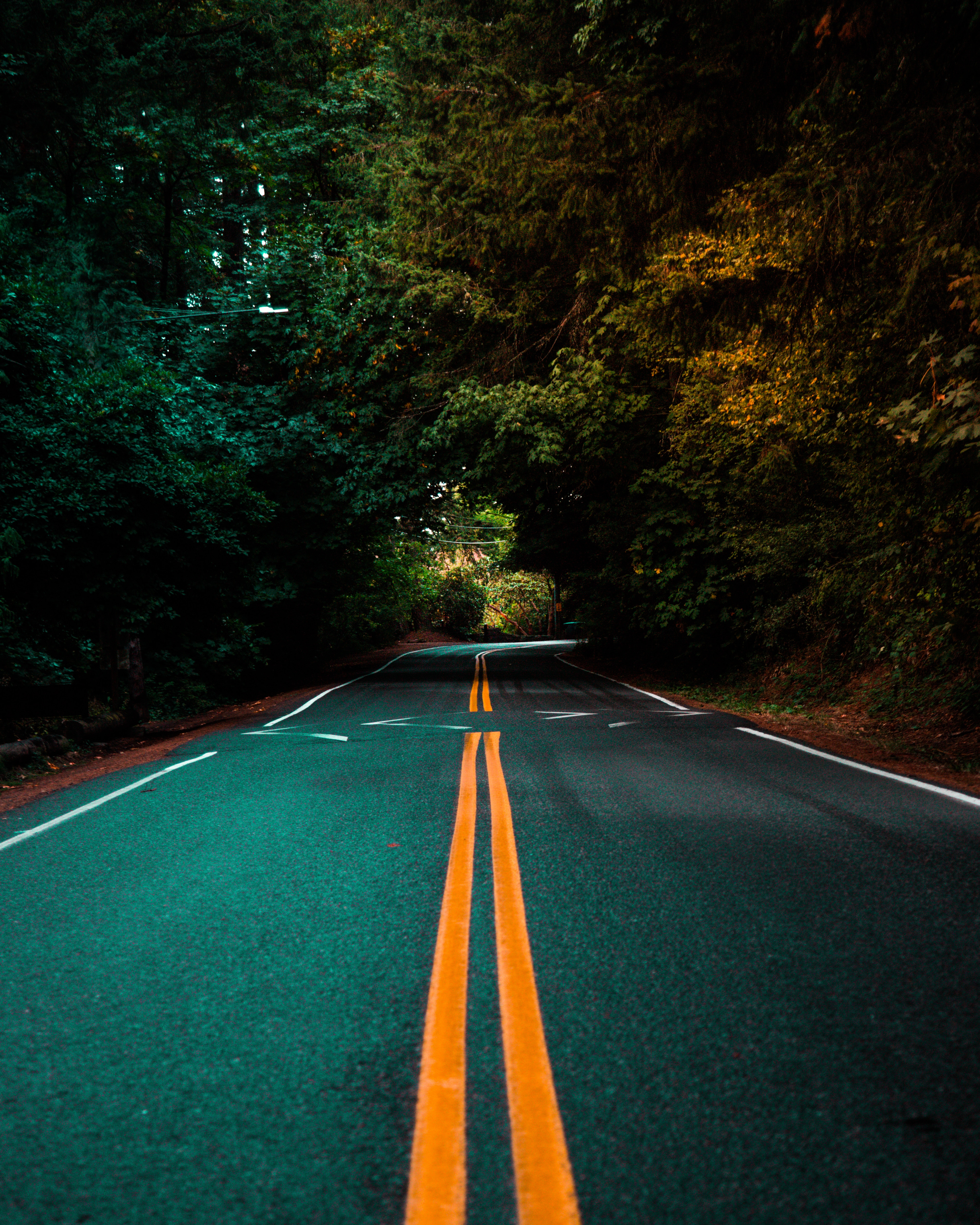 154185 free wallpaper 480x800 for phone, download images Nature, Trees, Road, Turn, Markup, Asphalt 480x800 for mobile