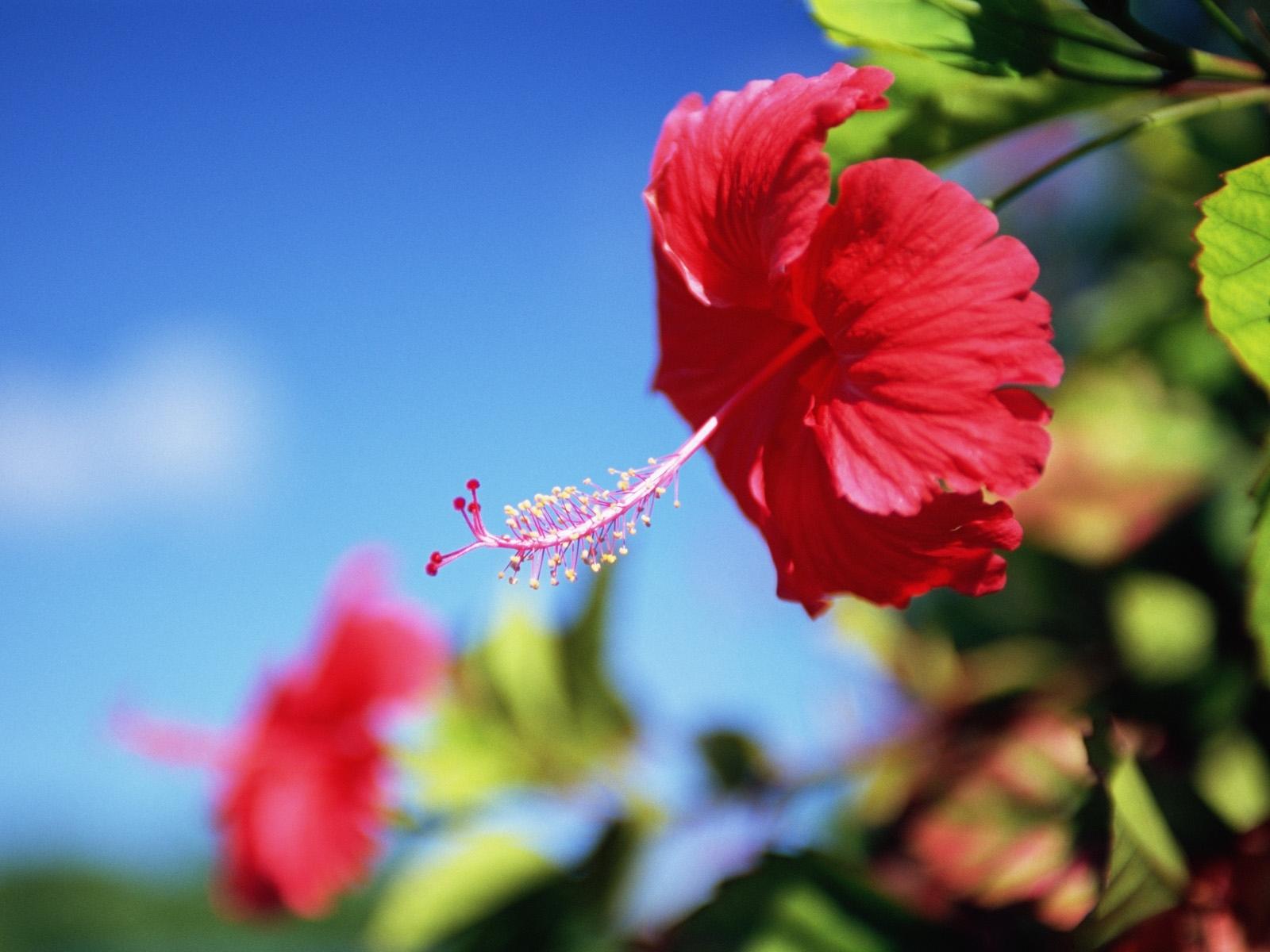 7811 скачать обои Растения, Цветы - заставки и картинки бесплатно