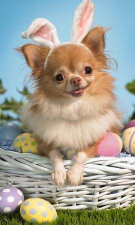 41308 baixar papel de parede Animais, Cães - protetores de tela e imagens gratuitamente