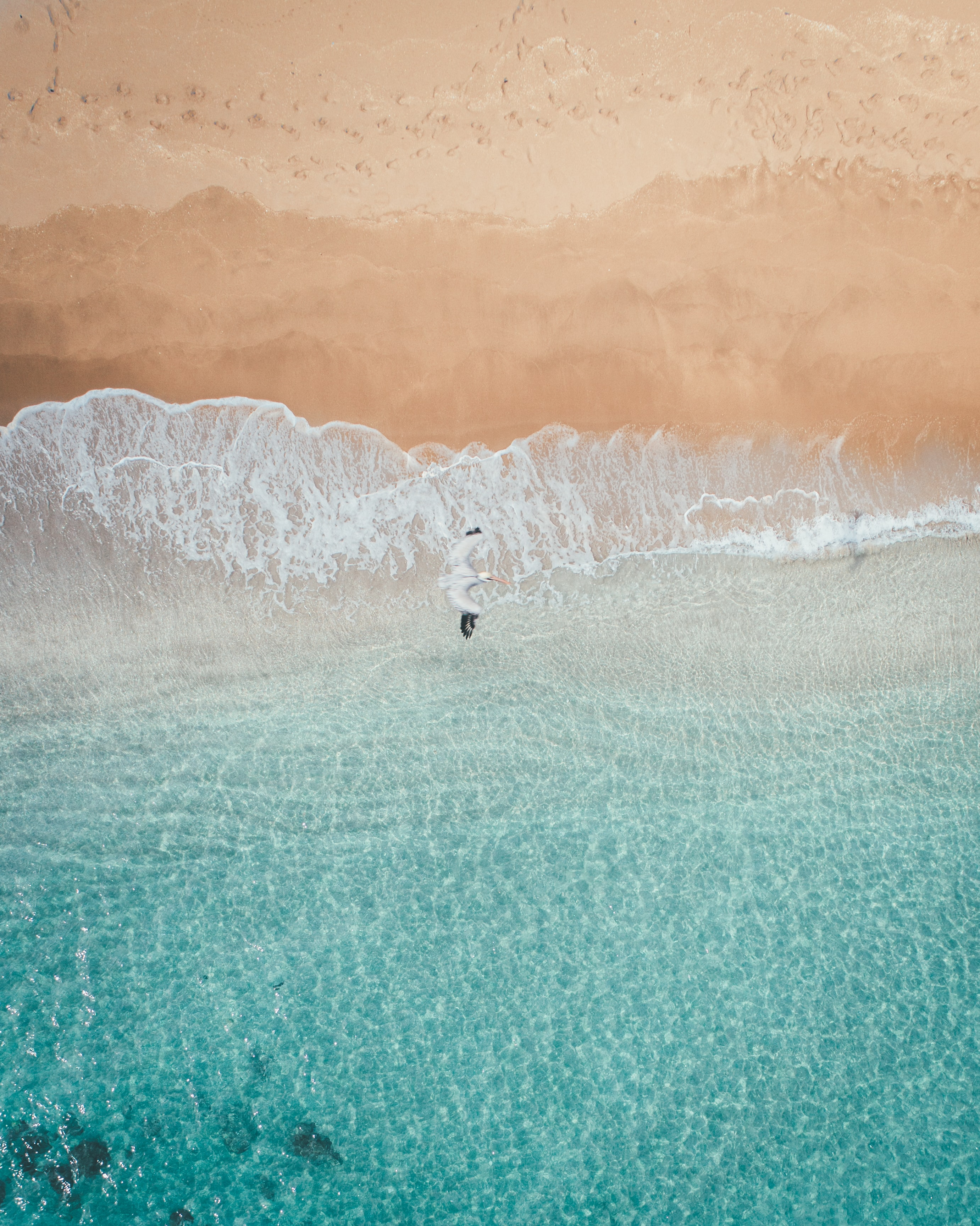 153777 download wallpaper Animals, Bird, Sea, Beach, View From Above screensavers and pictures for free