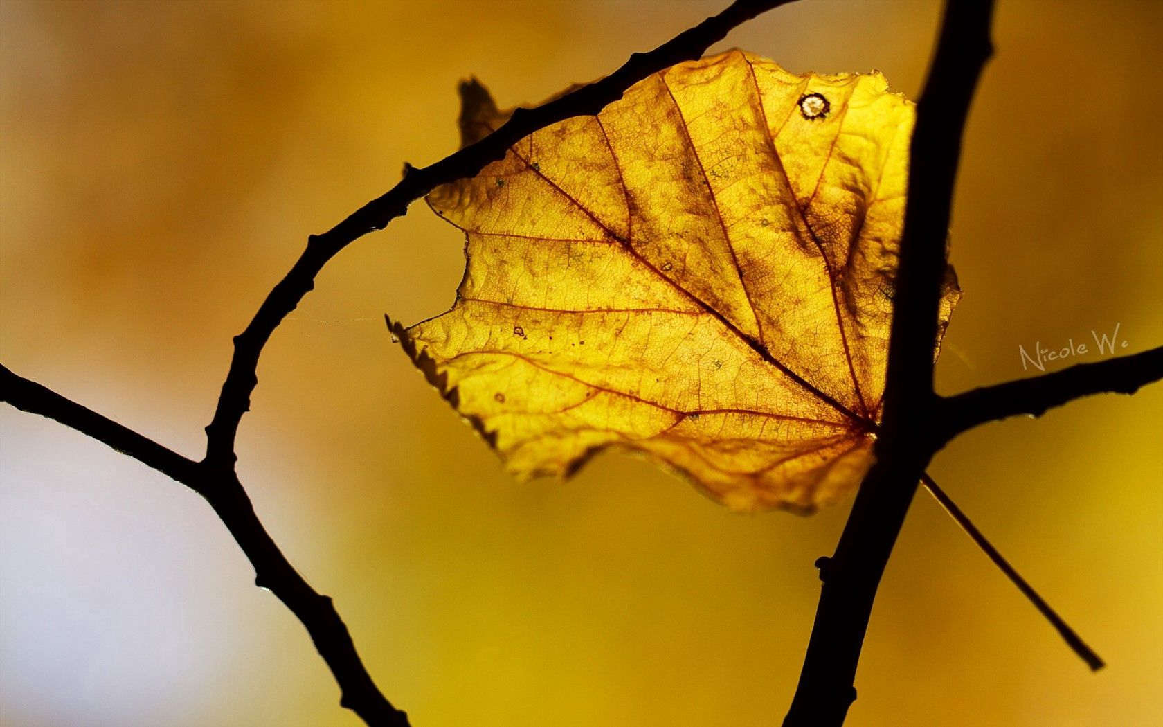 156679 download wallpaper Macro, Sheet, Leaf, Autumn screensavers and pictures for free