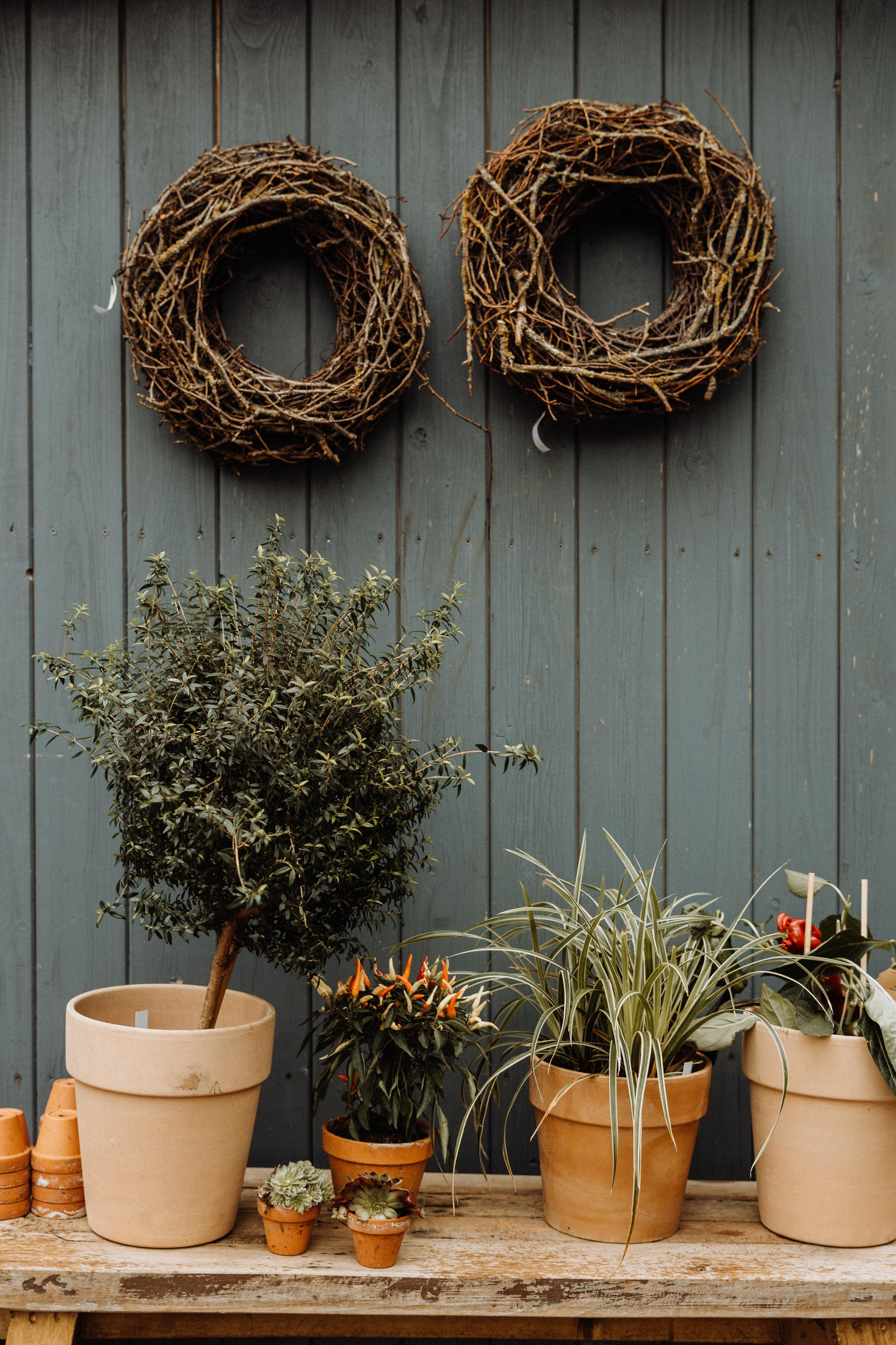 102209 скачать обои Цветы, Горшки, Растения, Декоративный - заставки и картинки бесплатно