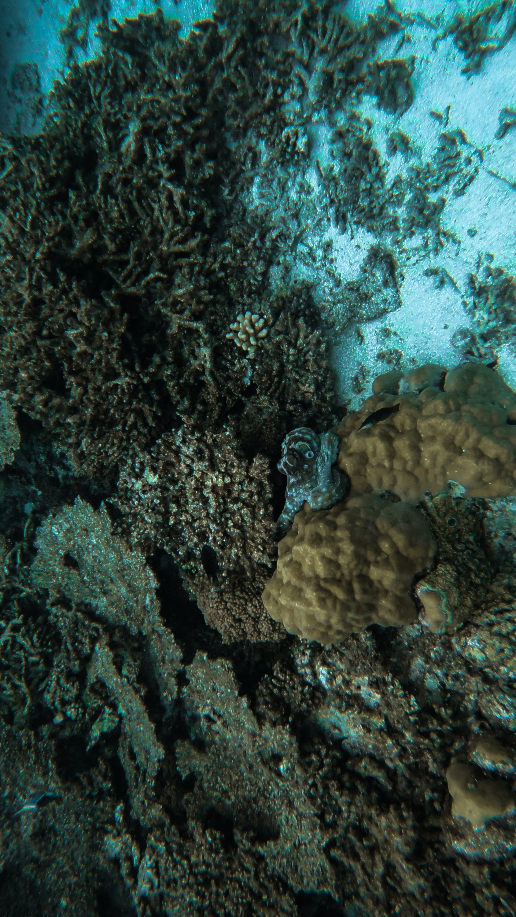 58651 download wallpaper Nature, Octopus, Seaweed, Algae, Underwater World, Coral screensavers and pictures for free