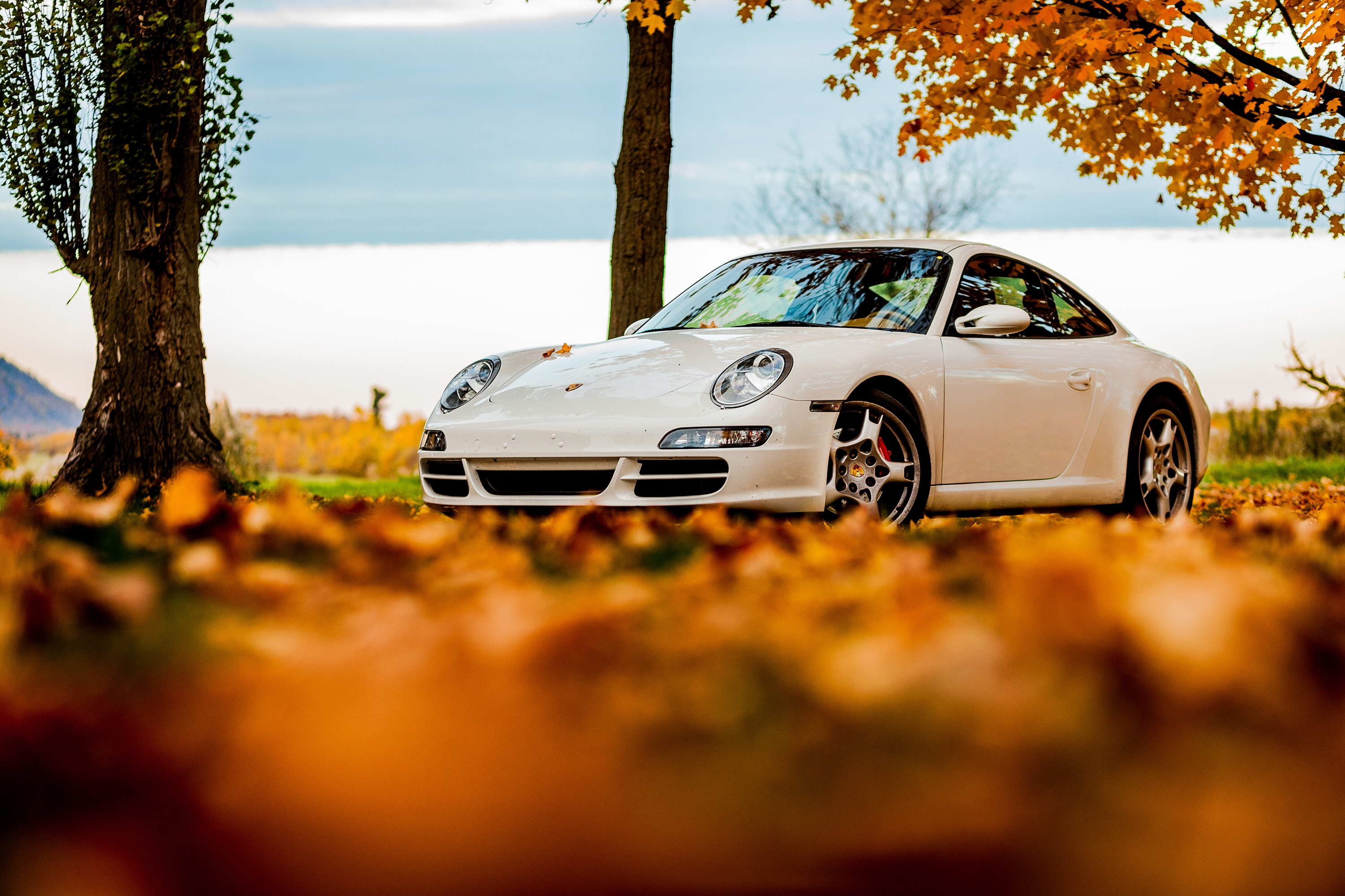 83959 download wallpaper Porsche, Trees, Sky, Autumn, Leaves, Cars, 911 screensavers and pictures for free