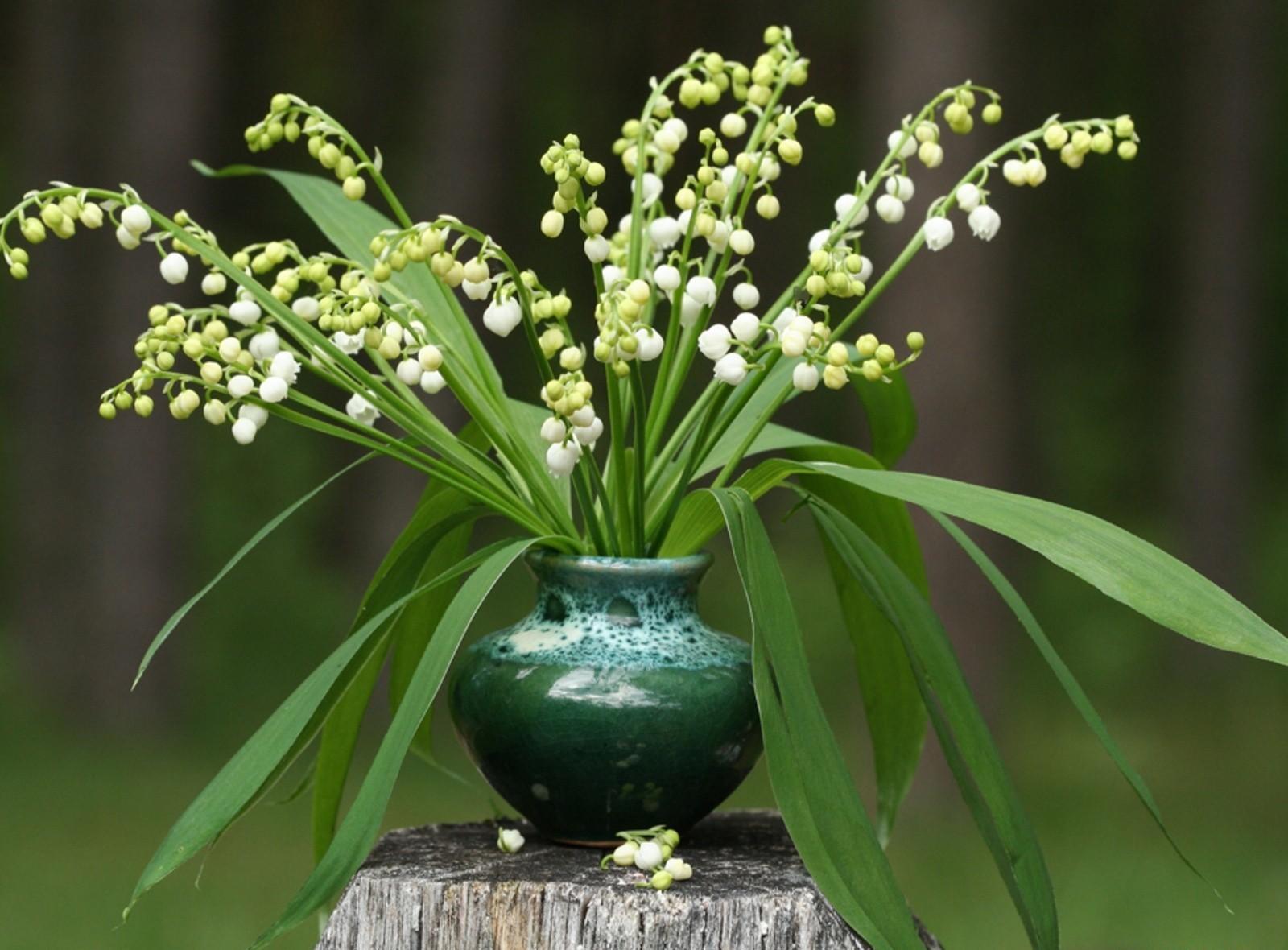 81915 Hintergrundbild herunterladen Blumen, Blätter, Maiglöckchen, Strauß, Bouquet, Vase, Stumpf, Penek, Primeln, Primrosen - Bildschirmschoner und Bilder kostenlos