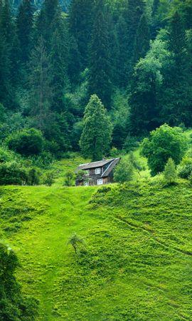 111112 baixar papel de parede Natureza, Casinha, Albergar, Floresta, Verão, Grama, Privacidade, Reclusão - protetores de tela e imagens gratuitamente