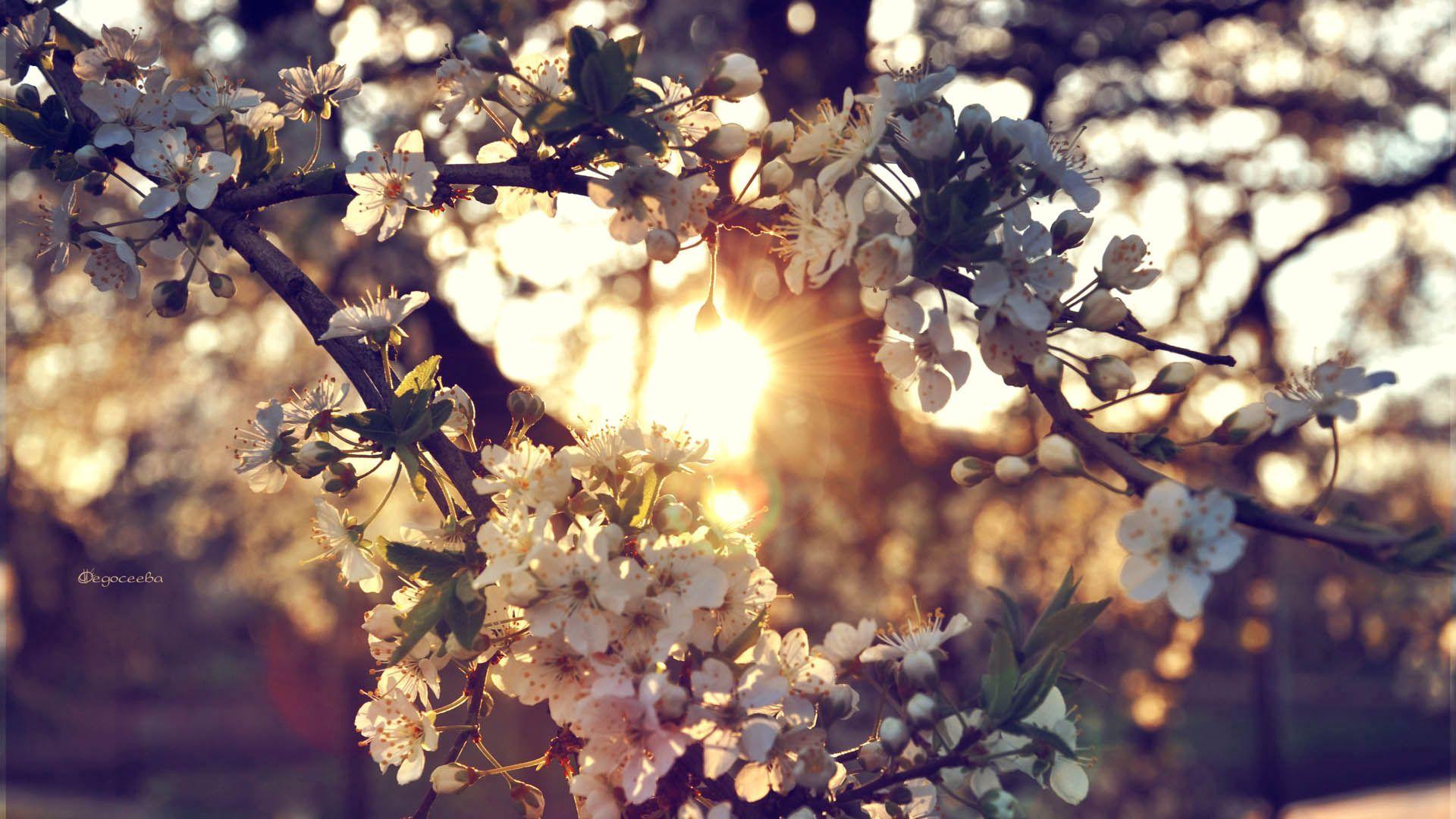 93118 Hintergrundbild herunterladen Blumen, Frühling, Ast, Zweig - Bildschirmschoner und Bilder kostenlos