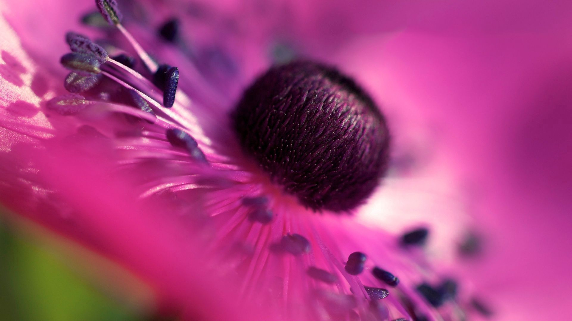 57054 Screensavers and Wallpapers Lilac for phone. Download Lilac, Flower, Macro, Petals pictures for free