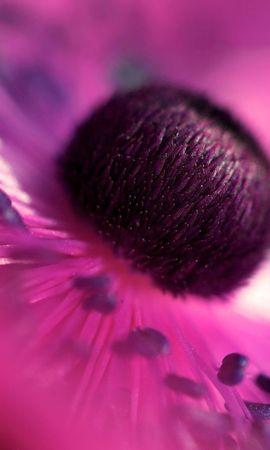 57054 télécharger le fond d'écran Macro, Fleur, Pétales, Lilas - économiseurs d'écran et images gratuitement