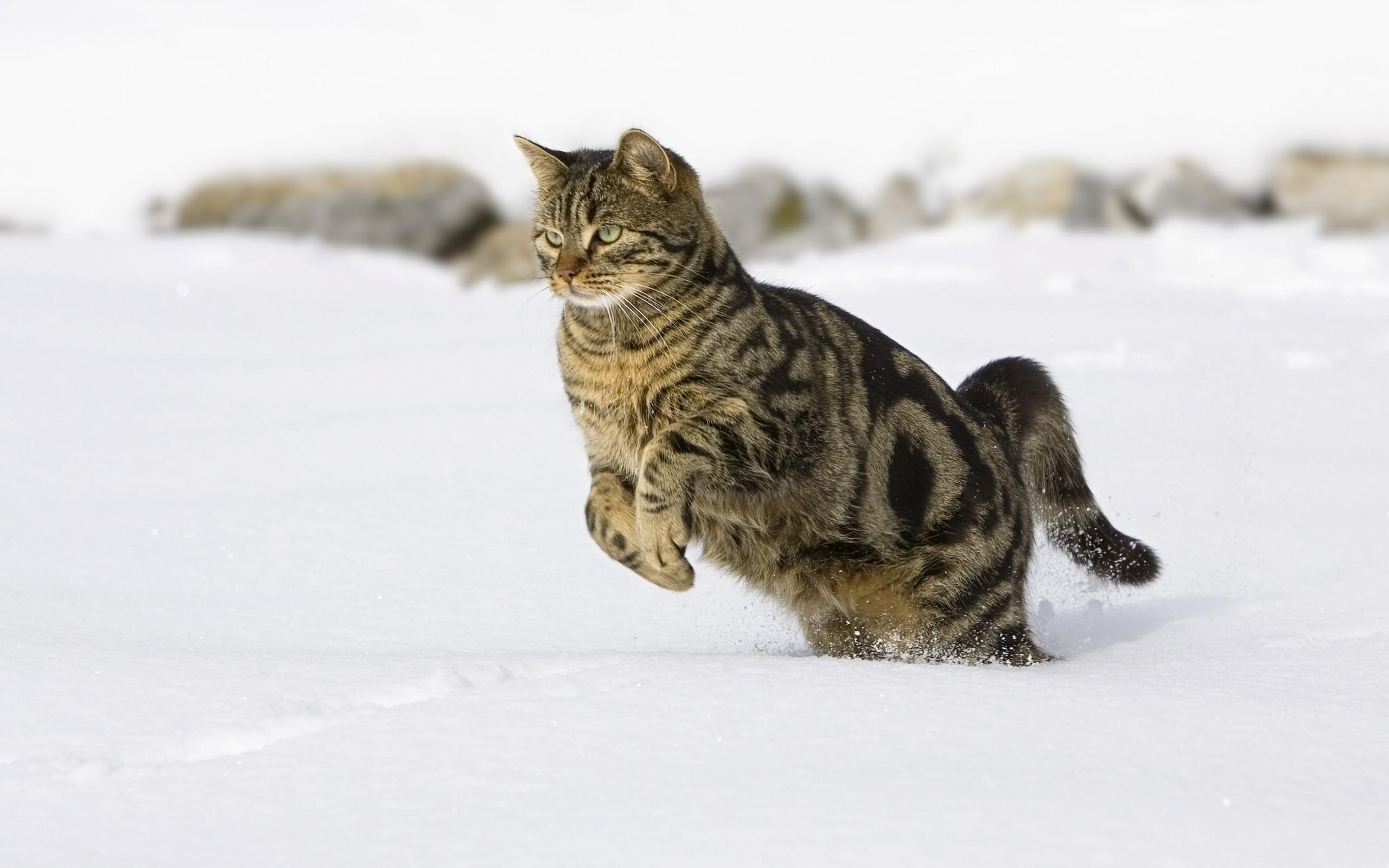 27531 обои 720x1520 на телефон бесплатно, скачать картинки Кошки (Коты, Котики), Животные 720x1520 на мобильный