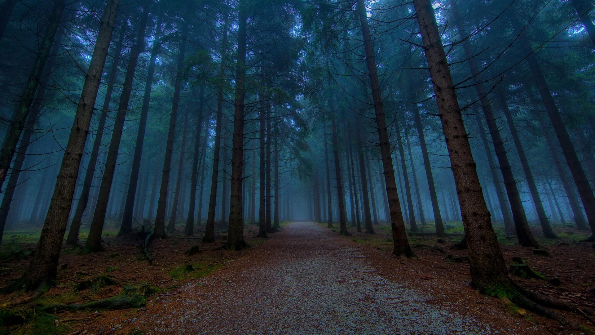32089 скачать обои Пейзаж, Деревья, Дороги - заставки и картинки бесплатно