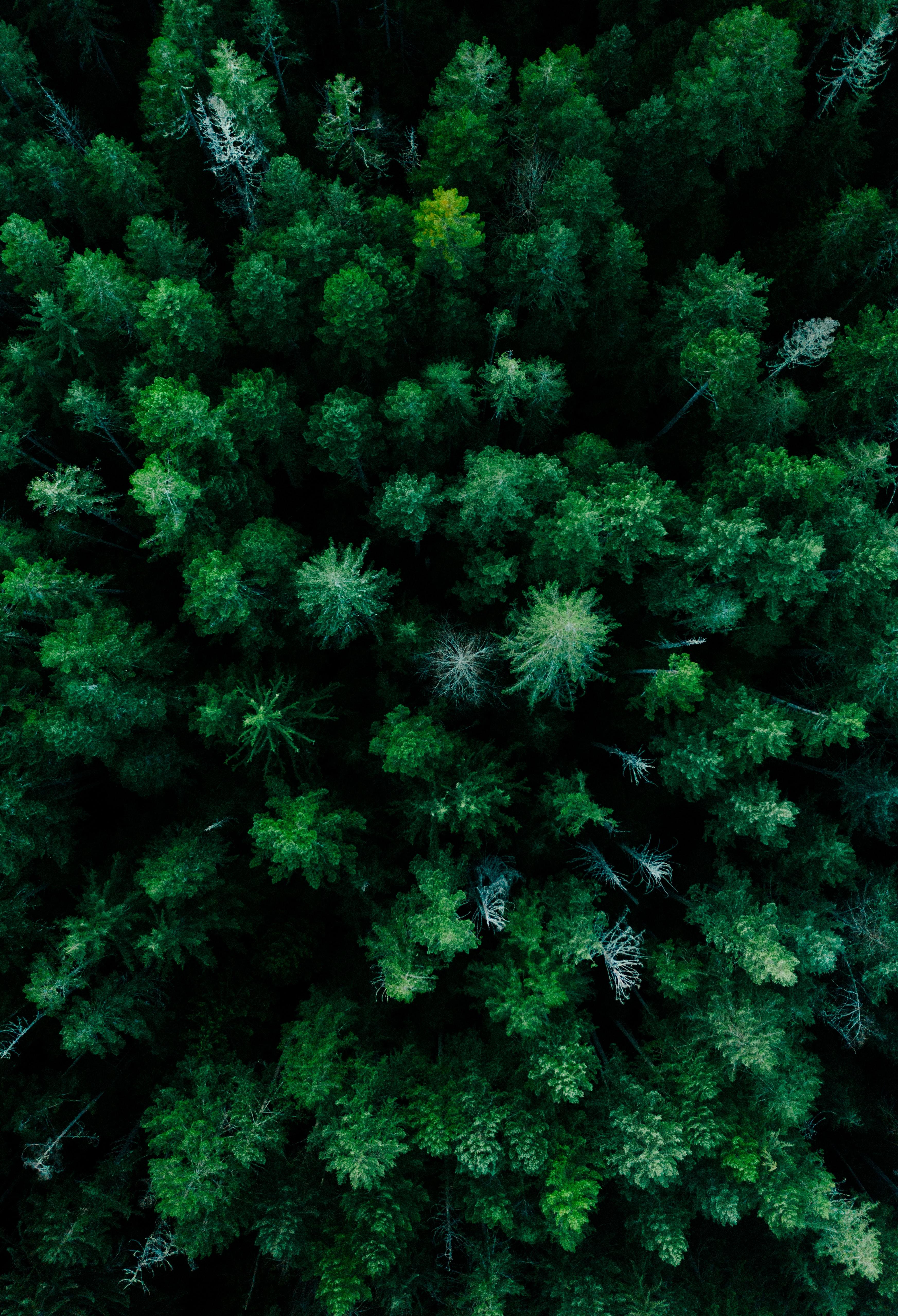 免費壁紙64748:性质, 森林, 从上面看, 顶视图, 树, 绿色的, 最高额, 顶部 下載手機圖片