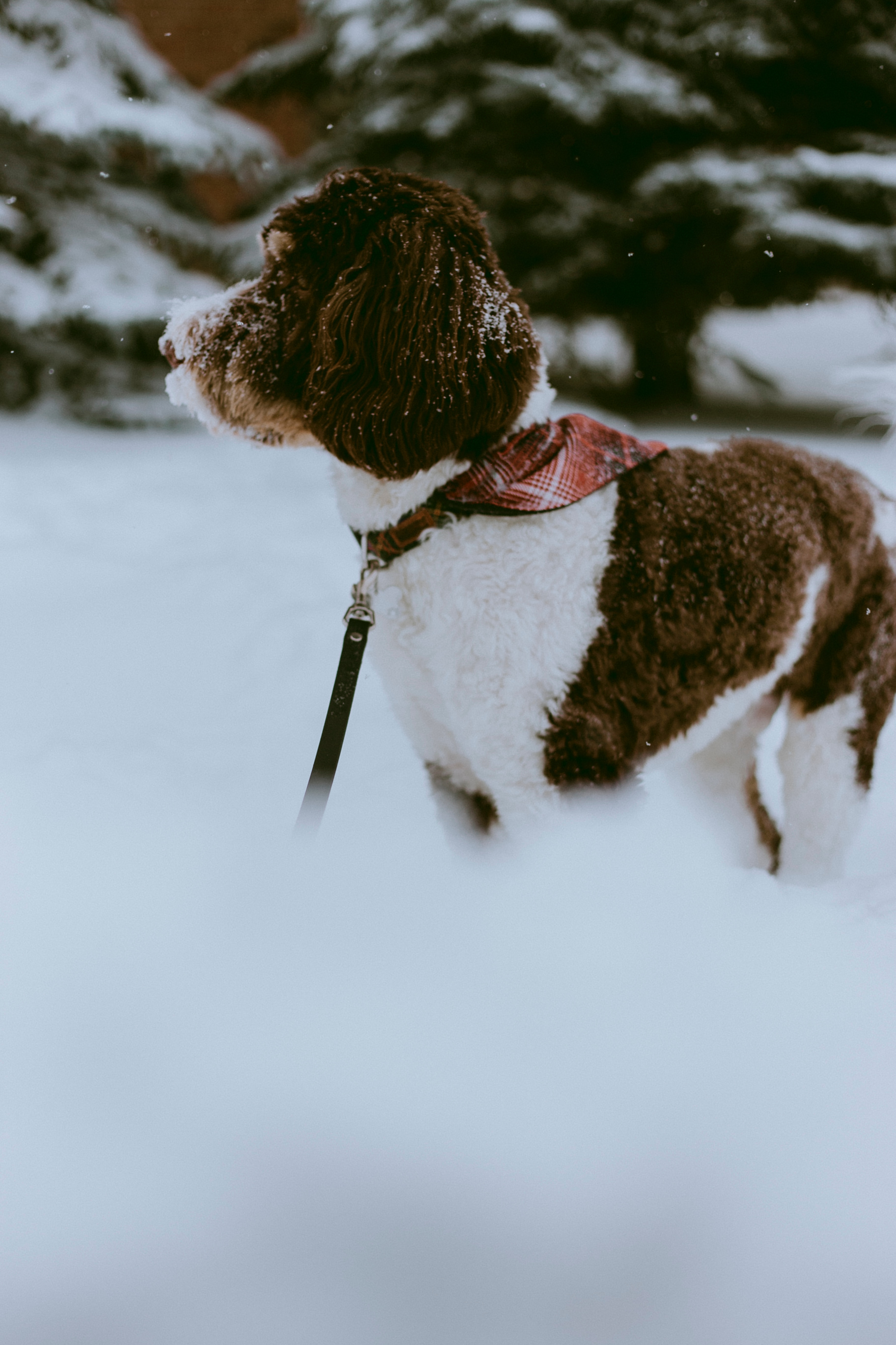 126179 download wallpaper Animals, Dog, Snow, Pet, Winter, Stroll screensavers and pictures for free