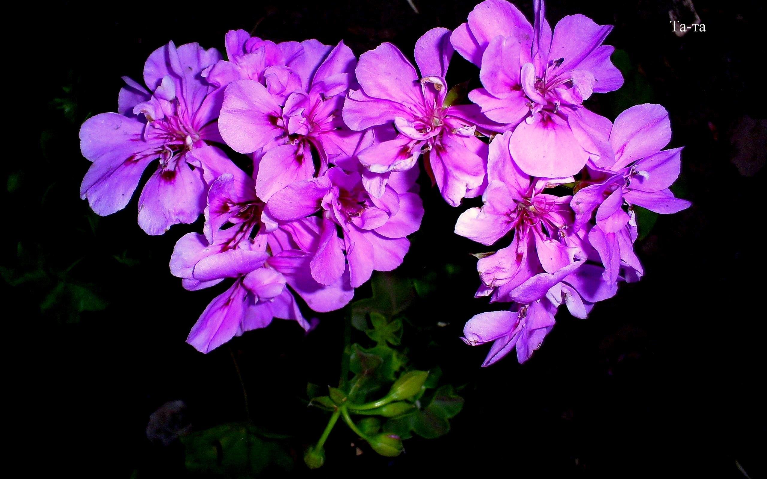 3990 скачать обои Растения, Цветы - заставки и картинки бесплатно
