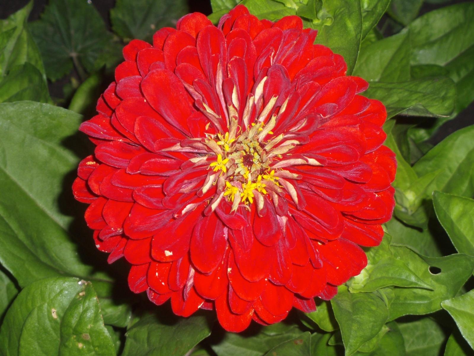 9726 descargar fondo de pantalla Plantas, Flores: protectores de pantalla e imágenes gratis