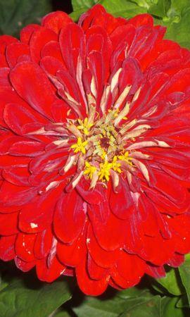 9726 скачать обои Растения, Цветы - заставки и картинки бесплатно