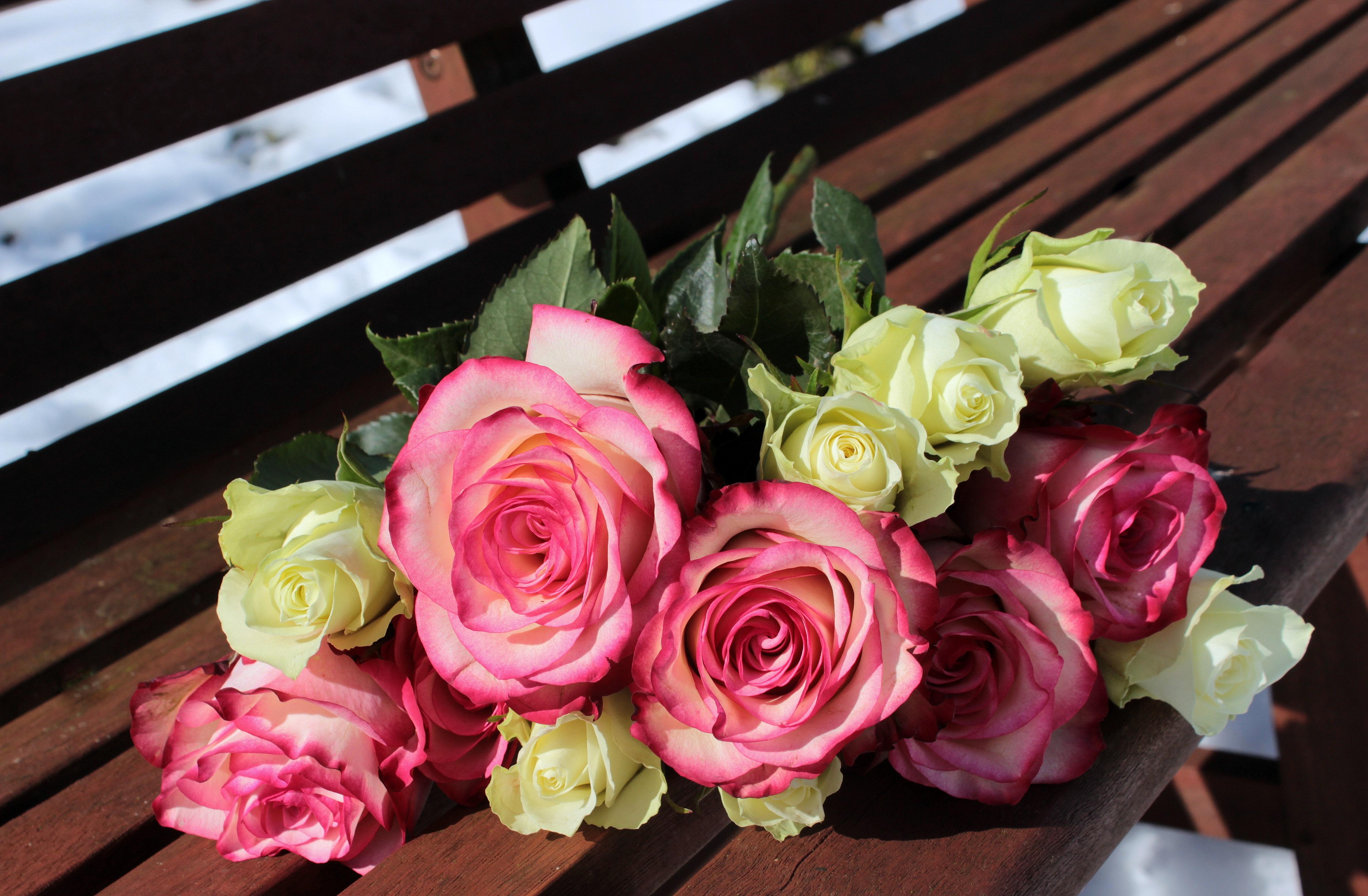 114419 скачать обои Цветы, Букет, Скамейка, Бутоны, Розы - заставки и картинки бесплатно