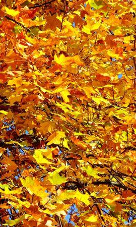 1463 скачать обои Растения, Деревья, Осень, Листья - заставки и картинки бесплатно