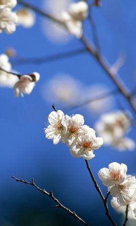 24807 скачать обои Растения, Цветы, Деревья - заставки и картинки бесплатно