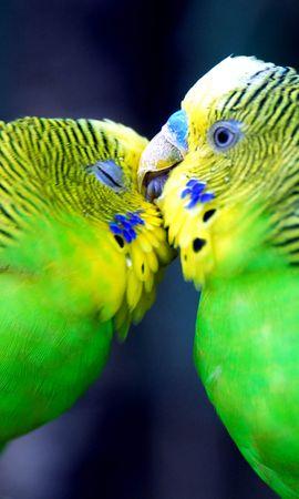 44121 baixar papel de parede Animais, Aves, Papagaios - protetores de tela e imagens gratuitamente