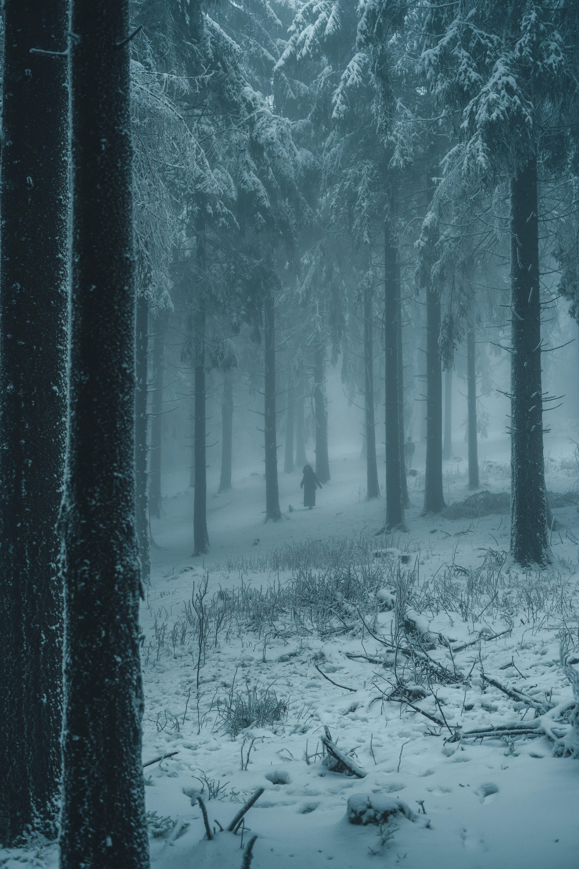 50411 Заставки и Обои Люди на телефон. Скачать Люди, Зима, Природа, Снег, Лес, Туман, Силуэты картинки бесплатно