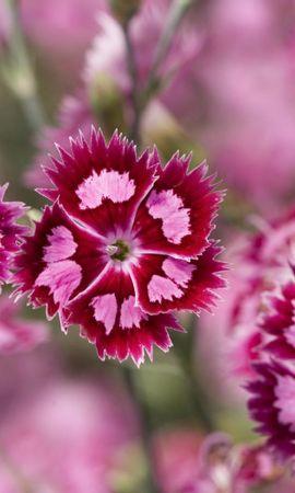 41802 descargar fondo de pantalla Plantas, Flores: protectores de pantalla e imágenes gratis