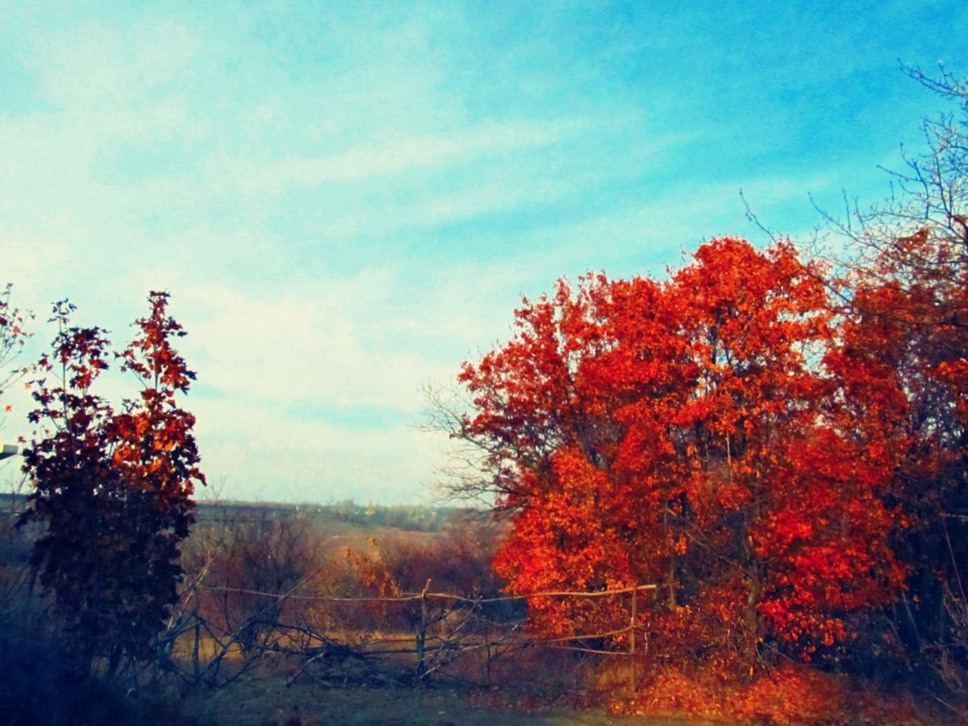 33666 download wallpaper Landscape, Trees, Autumn screensavers and pictures for free