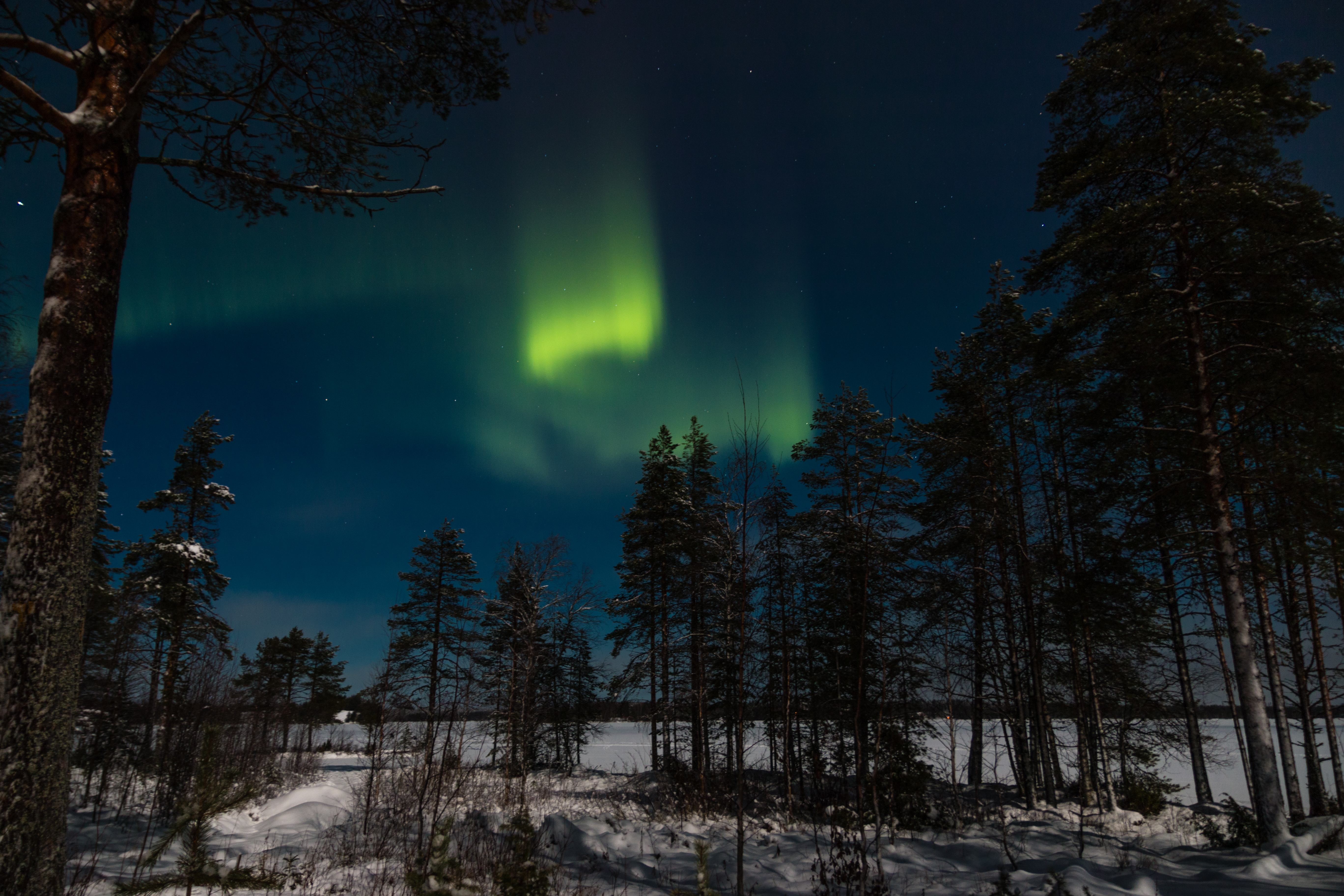 127726 download wallpaper Sky, Winter, Nature, Trees, Night, Forest, Northern Lights, Aurora Borealis, Aurora screensavers and pictures for free