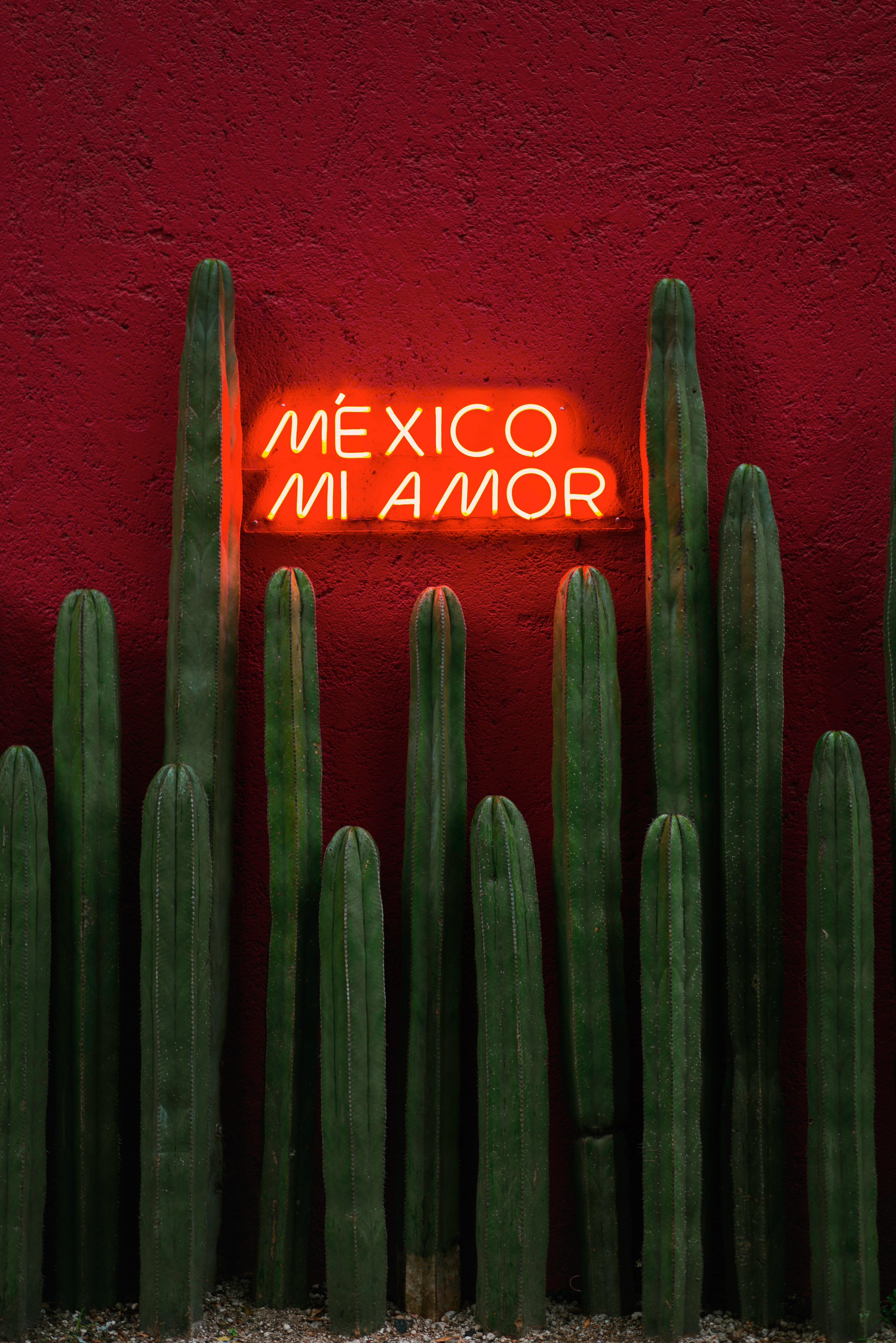 83091 download wallpaper Cactuses, Words, Neon, Text, Sign, Signboard screensavers and pictures for free