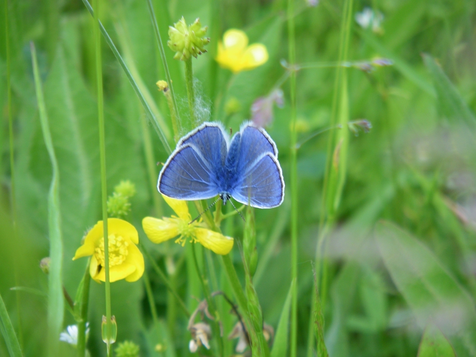 937 download wallpaper Plants, Butterflies, Flowers, Insects screensavers and pictures for free