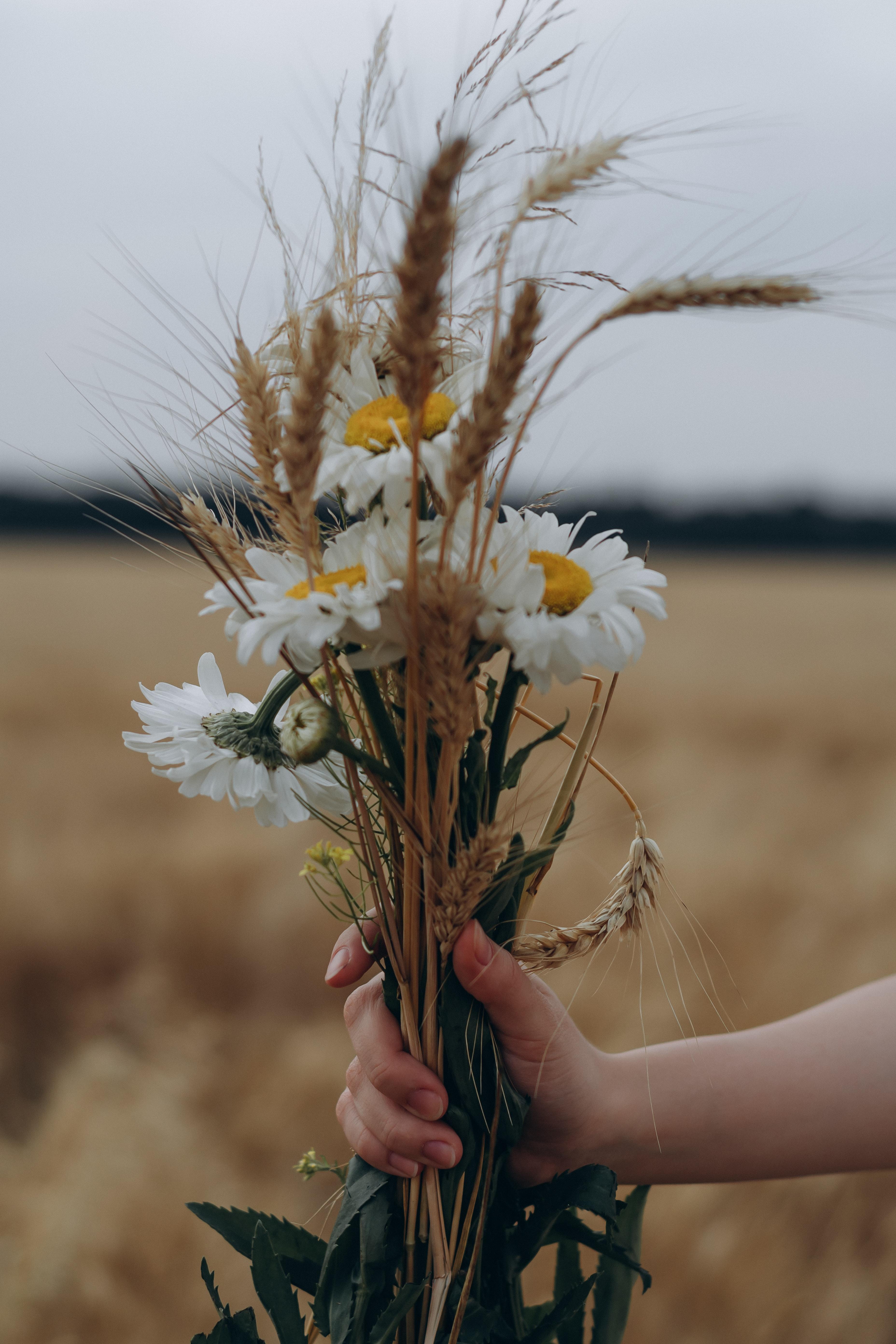 98593 скачать обои Цветы, Ромашки, Колосья, Букет, Рука - заставки и картинки бесплатно