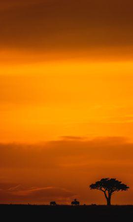51959 скачать обои Темные, Саванна, Закат, Сумерки, Дикая Природа, Пейзаж - заставки и картинки бесплатно
