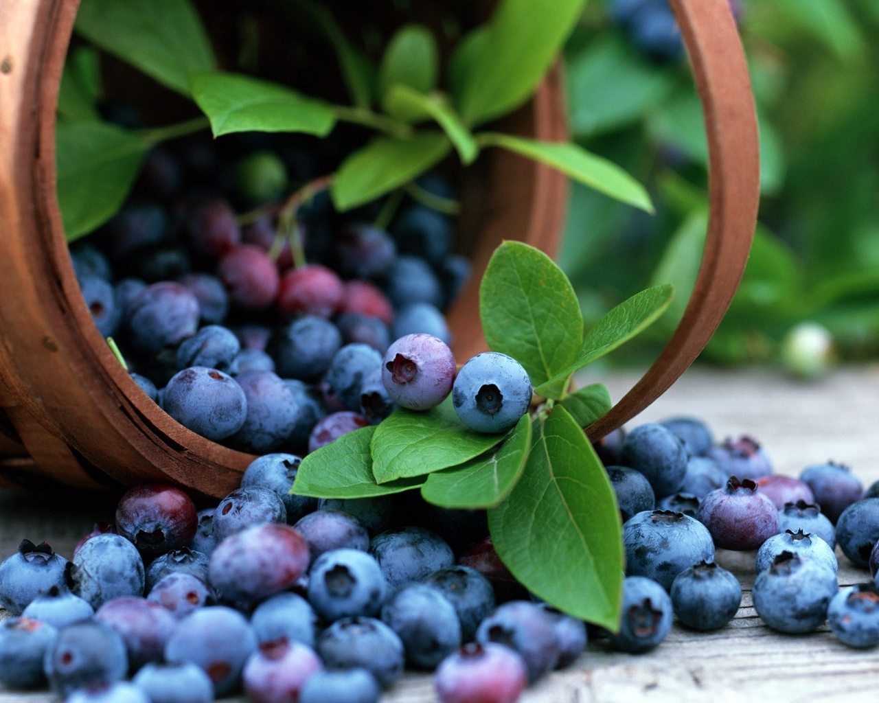 8214 download wallpaper Food, Leaves, Bilberries, Berries screensavers and pictures for free