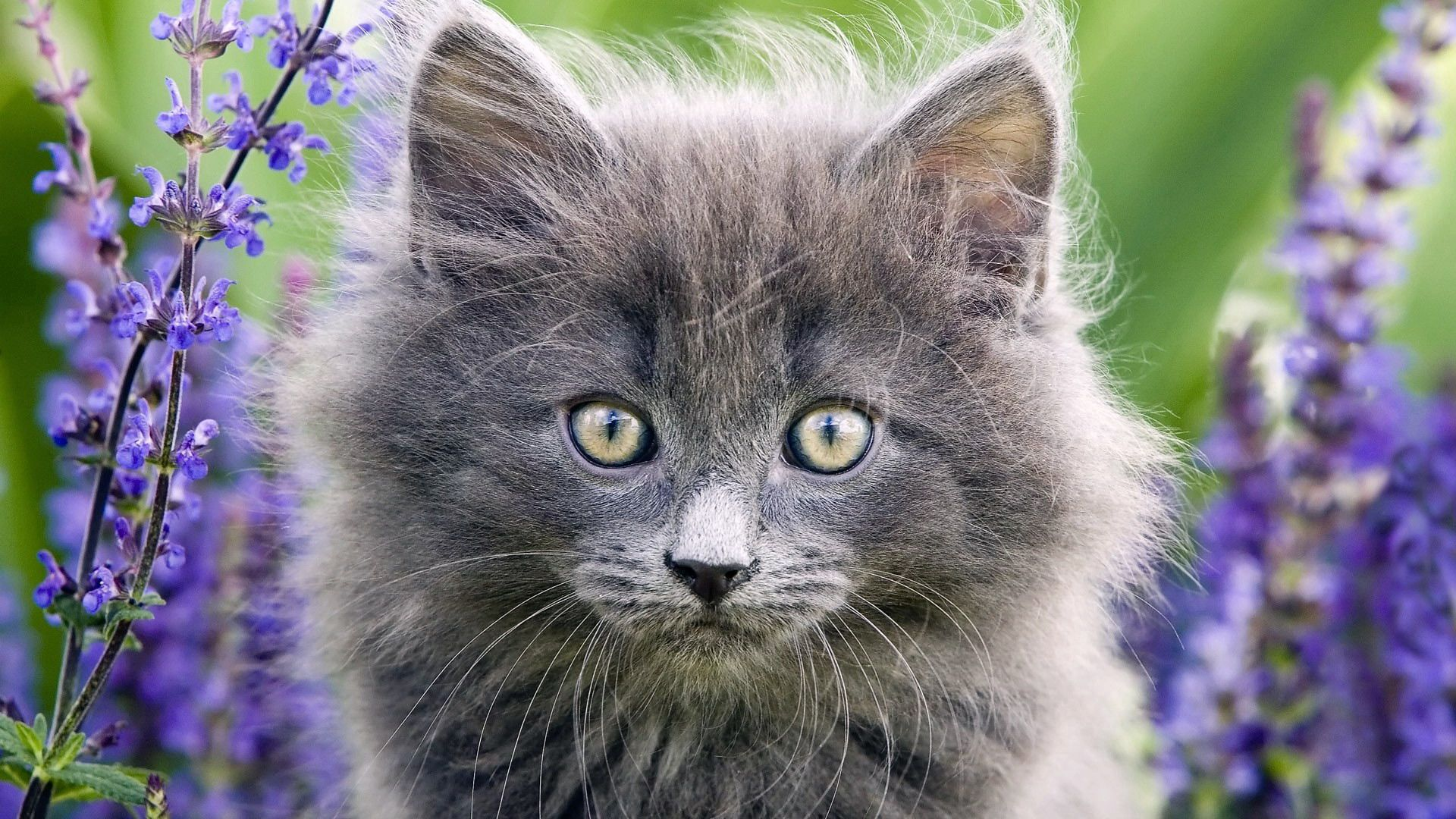 92524 Screensavers and Wallpapers Kittens for phone. Download Animals, Grass, Fluffy, Muzzle, Sight, Opinion, Kittens pictures for free